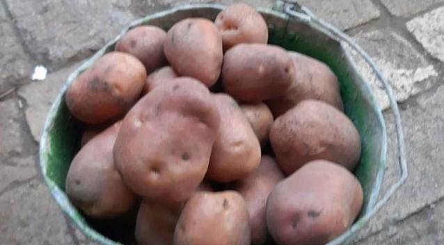 В Украине осенью цены на картофель могут побить все рекорды