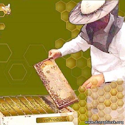 День пчеловода поздравление 73
