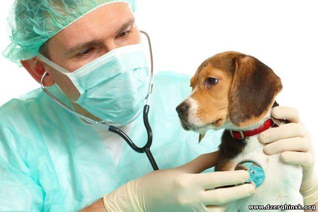 Скорая ветеринарная помощь.