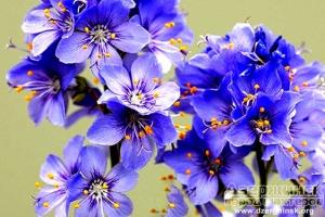 Флориум - лучший магазин растений для дома и сада