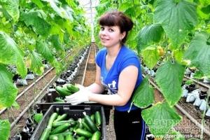 Работа за границей для студентов аграрных училищ
