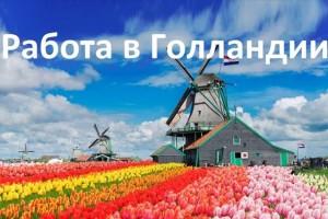 Найти работу в Нидерландах