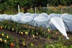 Парник Подснежник обеспечит вас свежими овощами с ранней весны до поздней осени
